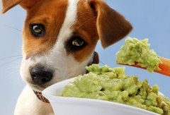 photolibrary_rf_photo_of_sad_dog_and_guacamole