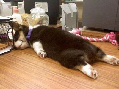 sleeping-puppy2