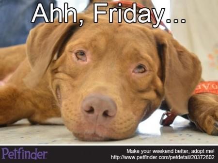 Oliver-dog-Friday-meme-450x336